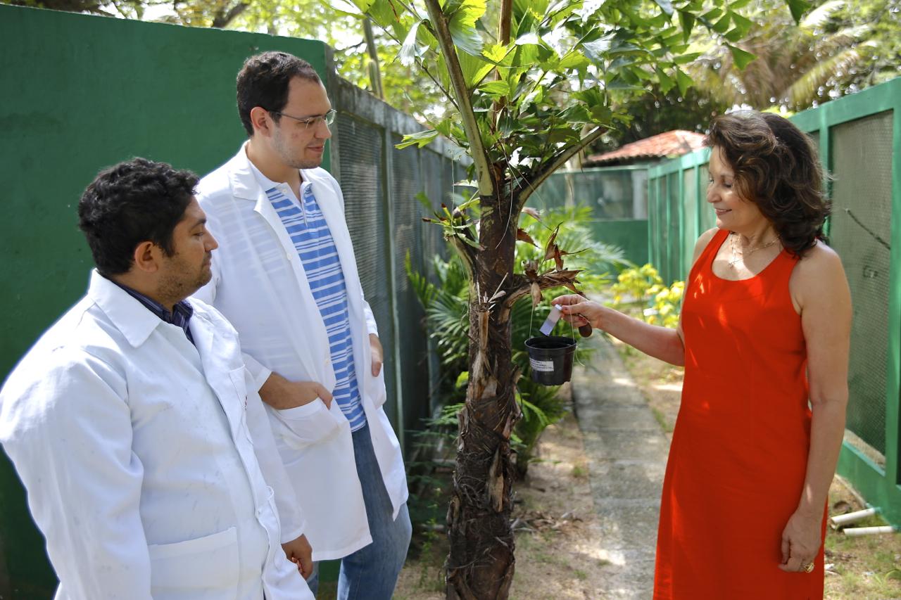 Matéria - Fatima Ximenes e pesquisadors - Aedes aegypti_22Jan15_Cicero Oliveira BR2 (1)