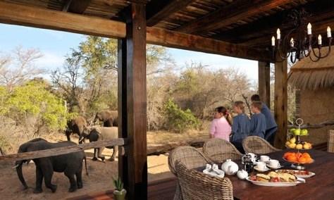 Cafe-da-Manha-com-Elefantes