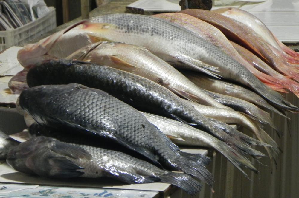 Peixe da Saemana Santa