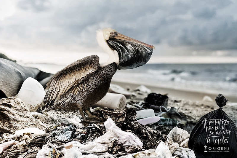 Brown Pelican (Pelecanus occidentalis) perched on a rock in the Guf of Mexico - Venice, Florida; Shutterstock ID 1023342625