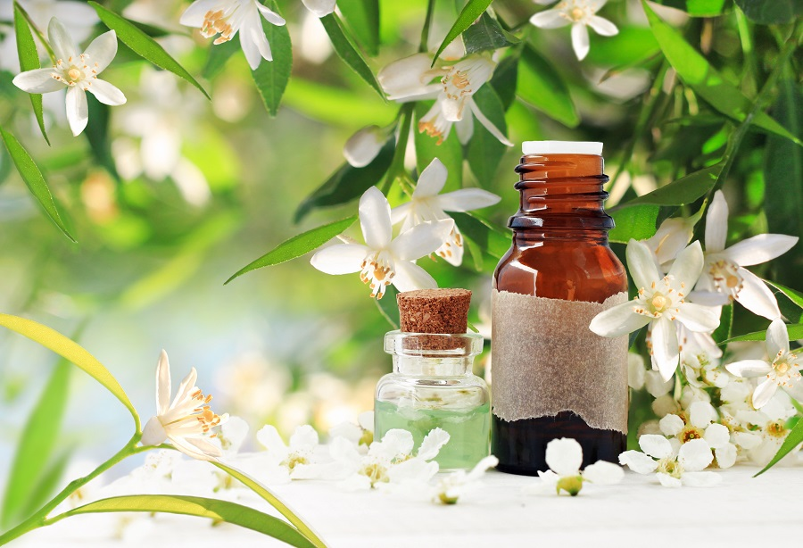 Neroli (orange) blossom perfume. Citrus essential oil bottles, spring flowering tree with white aroma flowers and green freshness.